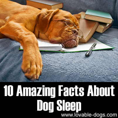 10 Amazing Facts About Dog Sleep