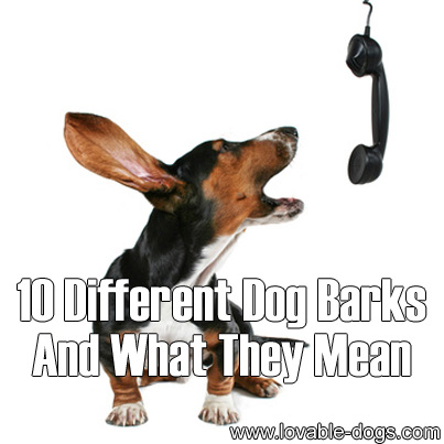 10 Different Dog Barks And What They Mean