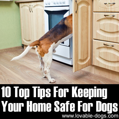 10 Tips For Keeping Your Home Safe For Dogs