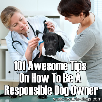 101 Awesome Tips On How To Be A Responsible Dog Owner