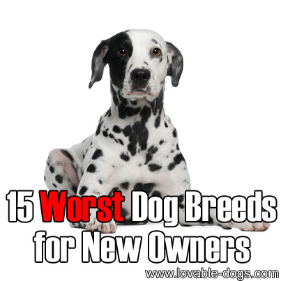 15 Worst Dog Breeds for New Owners
