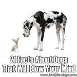 21 Facts About Dogs That Will Blow Your Mind