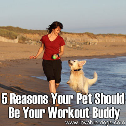 5 Reasons Your Pet Should Be Your Workout Buddy