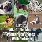 50+ Of The World's Most Popular Dog Breeds – With Pictures And Info