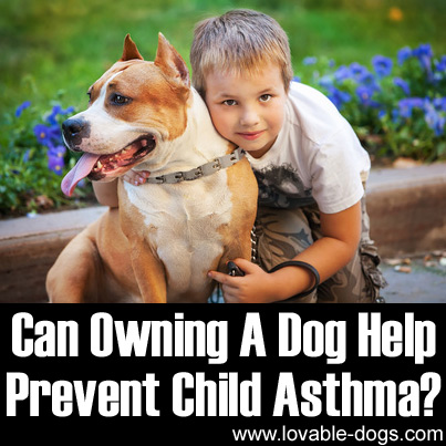 Can Owning A Dog Help Prevent Child Asthma