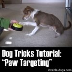 Dog Tricks Tutorial Paw Targeting