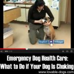 Emergency Dog Health Care: What To Do If Your Dog Is Choking