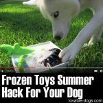 Frozen Toys Summer Hack For Your Dog