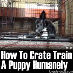 How To Crate Train A Puppy Humanely