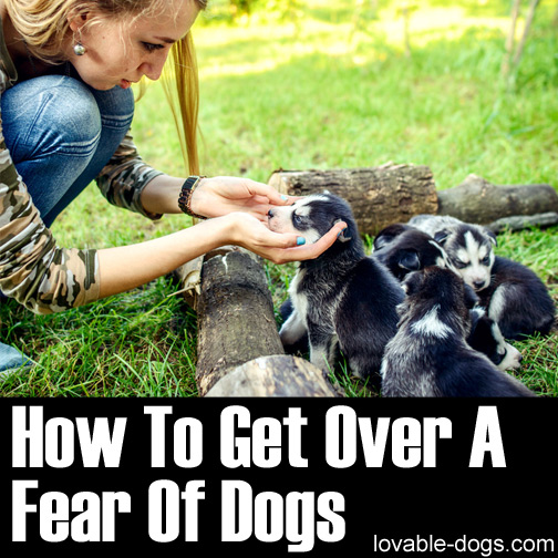 How To Get Over A Fear Of Dogs