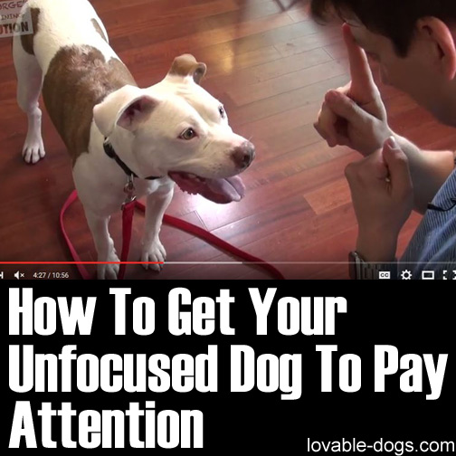 How To Get Your Unfocused Dog To Pay Attention