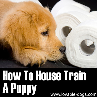 What Are The Easiest Dogs To Potty Train