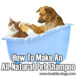 How To Make An All-Natural Pet Shampoo