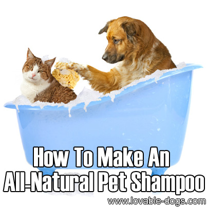 Jul 09, · Not all dog shampoo's have harmful ingredients for cats though 30 aug if you use a shampoo that contains combating fleas, may put your cat at risk.