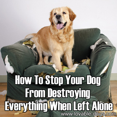 How To Stop Your Dog From Destroying Everything When Left Alone