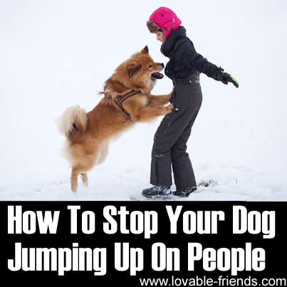 How To Stop Your Dog Jumping Up On People