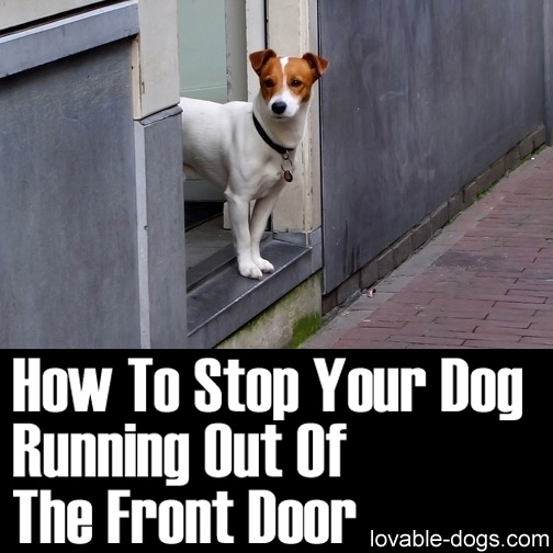 Lovable Dogs How To Stop Your Dog Running Out Of The Front Door