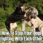 How To Stop Your Dogs Fighting With Each Other
