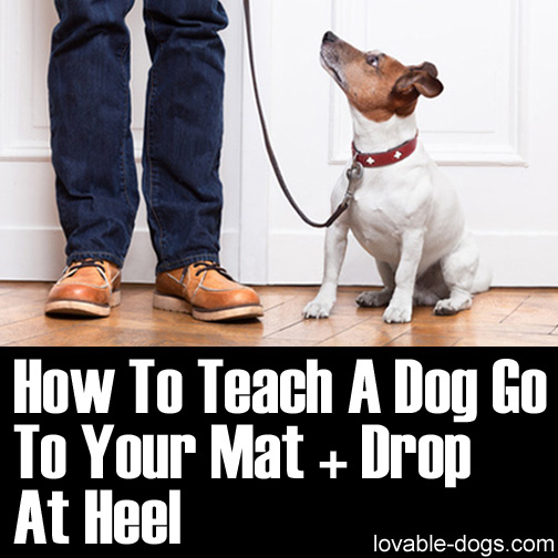 How To Teach A Dog Go To Your Mat + Drop At Heel