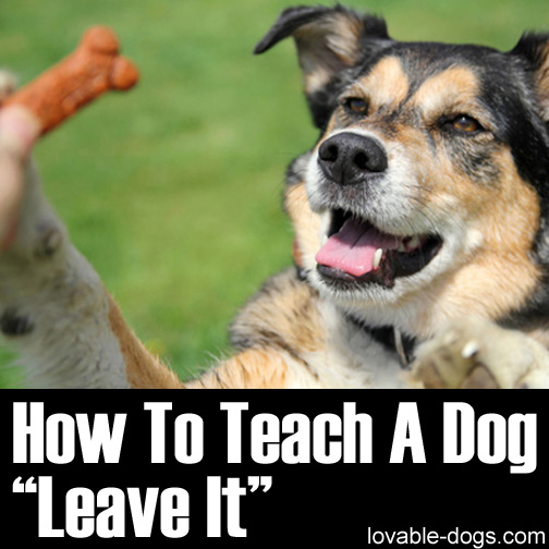 How To Teach A Dog Leave It