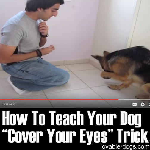 How To Teach Your Dog Cover Your Eyes Trick