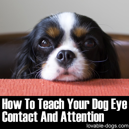How To Teach Your Dog Eye Contact And Attention
