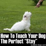 "How To Teach Your Dog The Perfect ""Stay"""