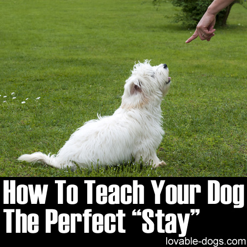 How To Teach Your Dog The Perfect Stay