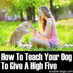 How To Teach Your Dog To Give A High Five