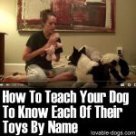 How To Teach Your Dog To Know Each Of Their Toys By Name