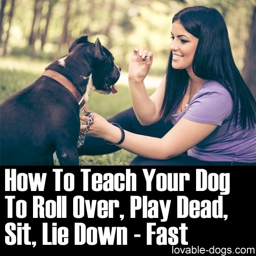 How To Teach Your Dog To Roll Over, Play Dead, Sit, Lie Down - Fast