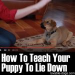 How To Teach Your Puppy To Lie Down
