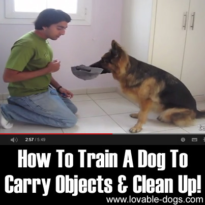 How To Train A Dog To Carry Objects & Clean Up
