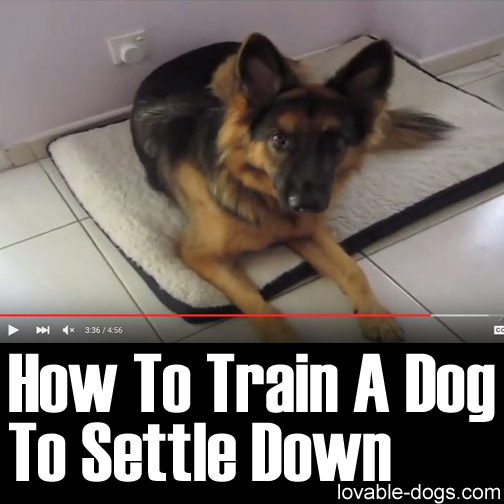 How To Train A Dog To Settle Down
