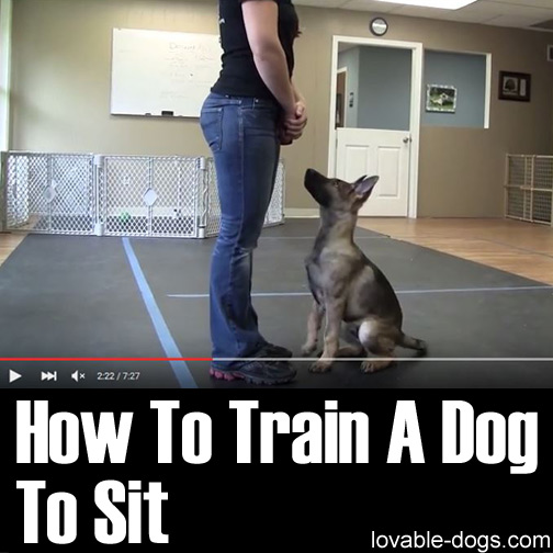 Best Way To Train A Dog