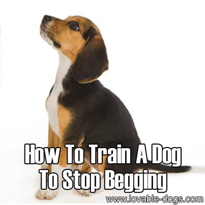 How To Train A Dog To Stop Begging