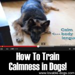 How To Train Calmness in Dogs!