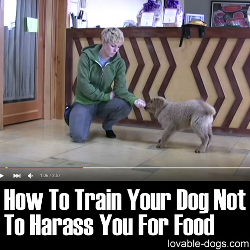 How To Train Your Dog Not To Harass You For Food