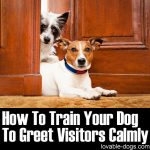How To Train Your Dog To Greet Visitors Calmly