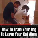 VIDEO: How To Train Your Dog To Leave Your Cat Alone