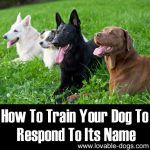 How To Train Your Dog To Respond To Its Name