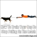 How To Train Your Dog To Stop Pulling On The Leash