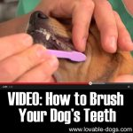 VIDEO: How to Brush Your Dog's Teeth
