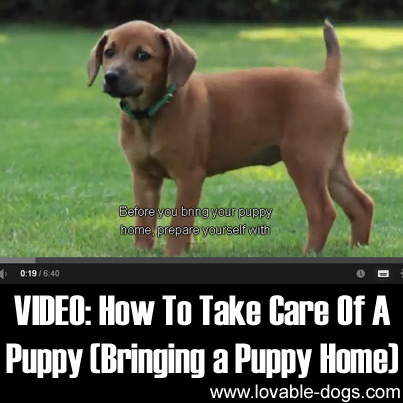 How to Take Care of a Puppy Bringing a Puppy Home