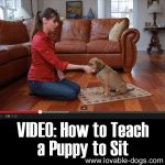 VIDEO: How To Teach A Puppy To Sit