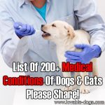 List Of 200+ Medical Conditions Of Dogs And Cats