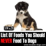 List Of Foods You Should NEVER Feed To Dogs