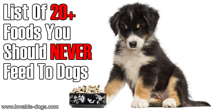 List Of Foods Your Dog Should Never Eat