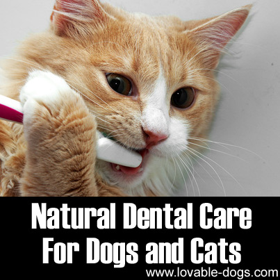 Natural Dental Care for Dogs and Cats