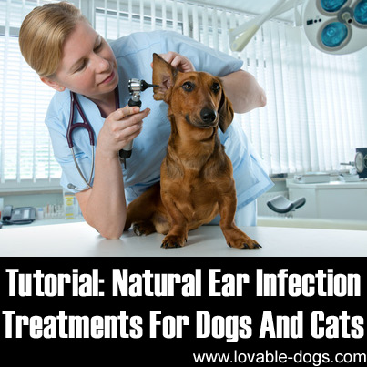 Natural Ear Infection Treatments For Dogs And Cats